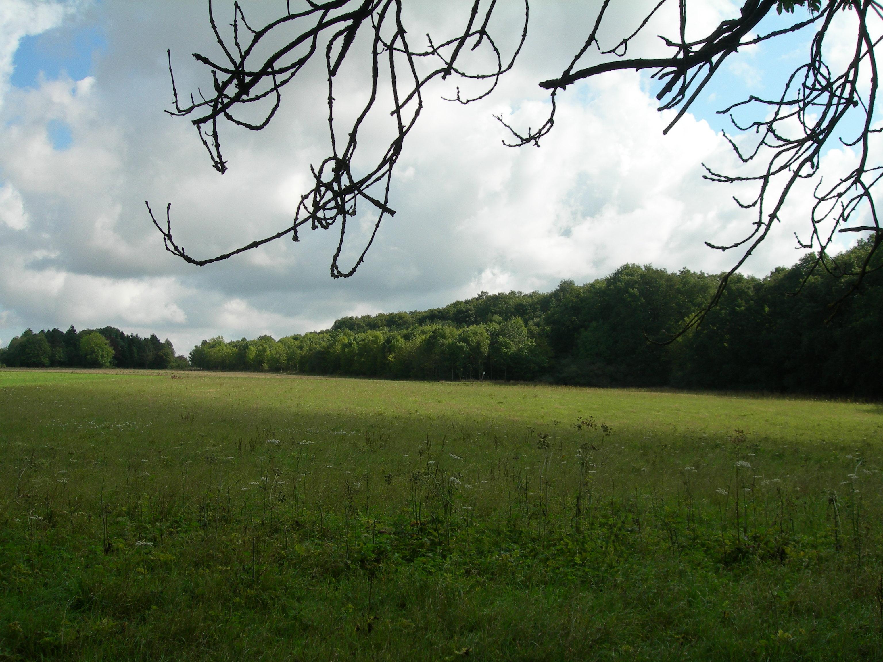 Forêt départemental de Champfailly